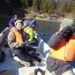 芦ノ湖とイタリ池で カモ水鳥カウント調査(日本野鳥の会神奈川支部版)