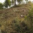 竹藪の整備を・・