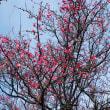 春発見^_^
