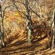 秋の三久安山