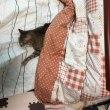 コタツで寝ましょう。
