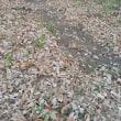浅瀬を歩いた記憶がよみがえる枯れ葉の小道