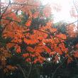 """""""autumn"""" 2017"""