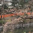 開花宣言後の井の頭公園散歩
