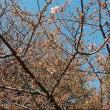 花~梅&河津桜