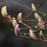 春休みの自由の森
