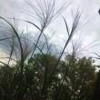 秋の七草、集合!