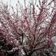 春分の日・・・なのに・・・