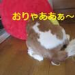 大根ステーキ&ド根性プリン&松本潤・井上真央 完全破局!