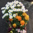 散歩途中の花に癒されて
