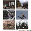 2012年1月29日(日) 「京都御苑で野鳥の観察」