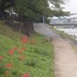 彼岸花と萩