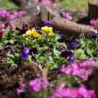 日吉八幡神社境内の花々