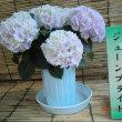 """なばなの里 """"あじさい・花しょうぶまつり&ホタル祭り""""  6月9日(金)"""