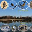 冬晴れの良き日 短時間の鳥見に出かける