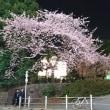 春本番 上野公園の桜
