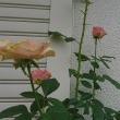 """17/10/21  """"LA VIE EN ROSE"""" 台風21号が北上中。"""