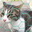 今週末2/25(日)は松山市駅前にて「猫の譲渡会」です