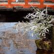 3925 水面の春