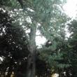 小石川植物園コース 約3.7Km