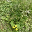 春の野・その2