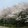 桜が咲いた・・・
