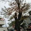 4/1(日)お花見