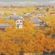 黄金色に染まる町 祖父江!