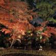 (2017年改訂版)京都・紅葉の名所勝手にランキングその4(計240か所)