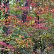 秋の色(野菊)