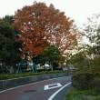 【早朝のお散歩】 17/11/25 遅く起きた朝は明るい風景