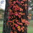 秋のキャンプin長野県🍁