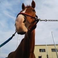 日曜日の馬