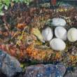 「陽だまりの中で」油彩画F6/カモのたまご/北海道伊達市