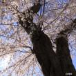 駆け足の春