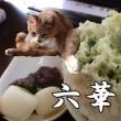 猫を留守番させて岡崎『六華亭』でかき氷を食べてきた【猫日記こむぎ&だいず】2017.08.21