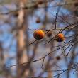 ★初冬の林に残る色② 2017