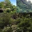 春から梅雨入りまでの山の景色の色の変化の速い事!に驚いています。