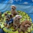 犬のしつけ教室&犬の幼稚園@アロハドギーは、本日から通常営業です(*^-^*)