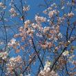 春はそこまで🌸