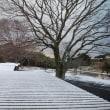 1月26日 家和楽にも 初雪