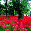 彼岸花の季節ですね(*゚∀゚*)