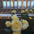 大阪グランフロントの空中庭園でバラ