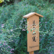 にしさんの花日記 萩 東京で萩といえば 向島百花園の萩のトンネル