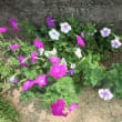 私が育てる花達