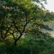 白髭神社で日の出撮影
