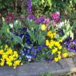 チューリップとか花がたくさん