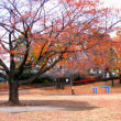 川越御伊勢塚公園の紅葉(その2)