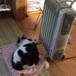 やっぱり猫は暖かい所が好き❣️