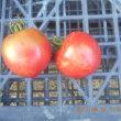 今日の収穫 シロウリ キュウリ ピーマン シシトウ ナス トマト